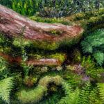 George Allan | Rebirth-Waikamoi