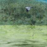 Lucrezia Oddie | Avian Paradise