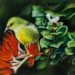 Carmen Gardner | Na ʻAmakihi o Maui