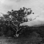 Gwen Arkin | In Silence Lies Clarity