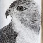 Jordan Akana |Bright Feathers