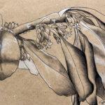Syle Anton | Untitled