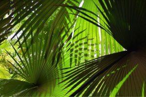 Merwin Palms