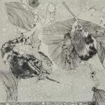 Sarah Nassar - Flora for Fauna